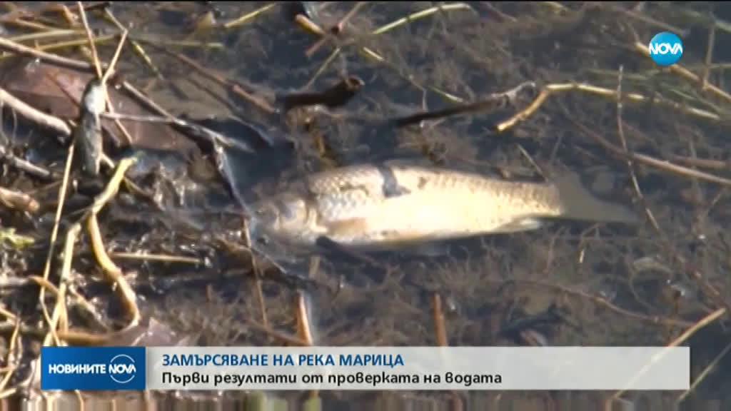 Още мъртва риба изплува от река Марица край Стамболийски