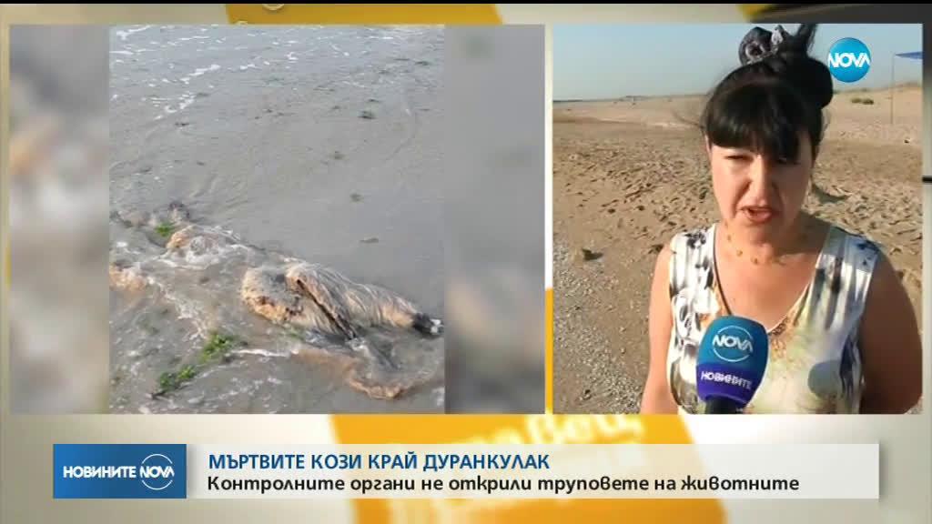 Мъртви кози с румънска маркировка изхвърли морето край Дуранкулак