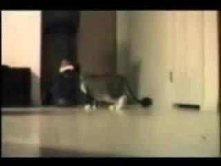 Забавни Котки - Супер Смях!!!