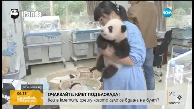 Хората все по-близо до разчитане езика на пандите