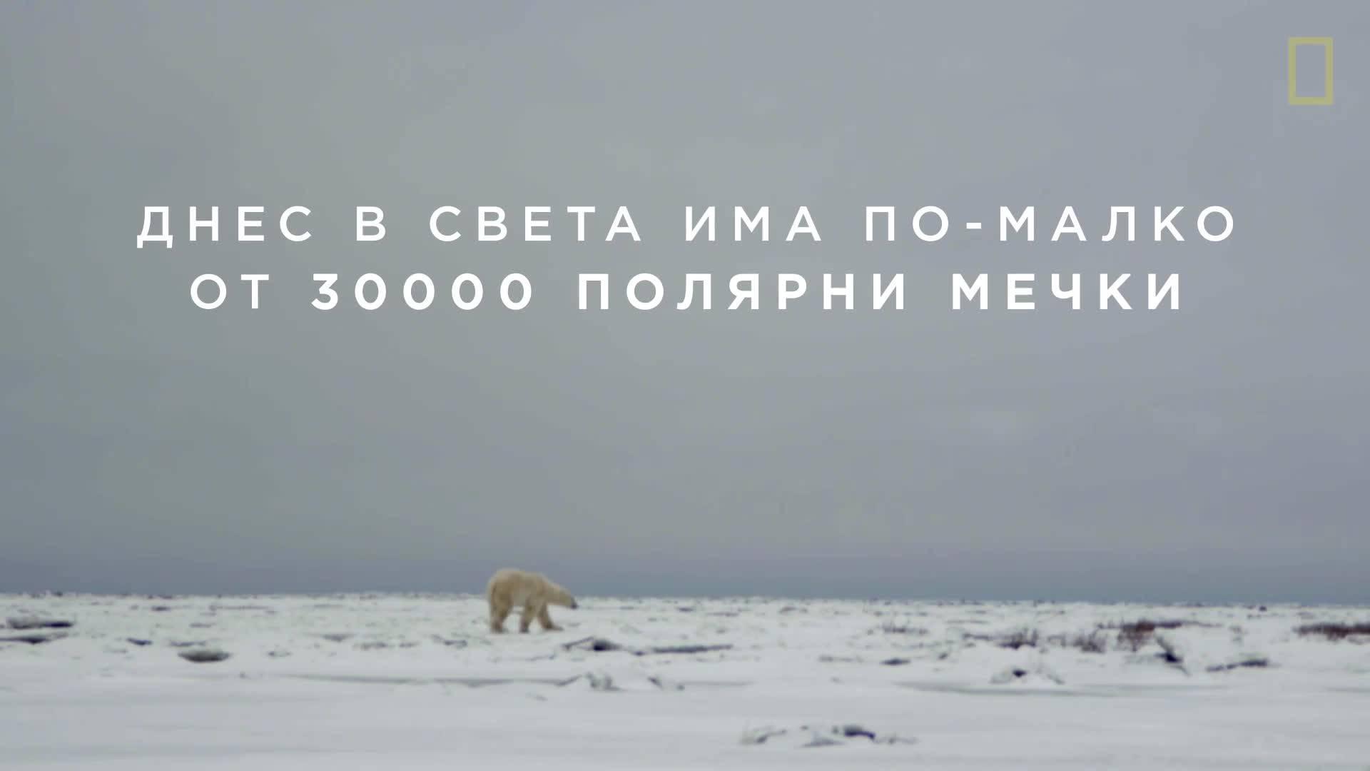 Животът на полярната мечка
