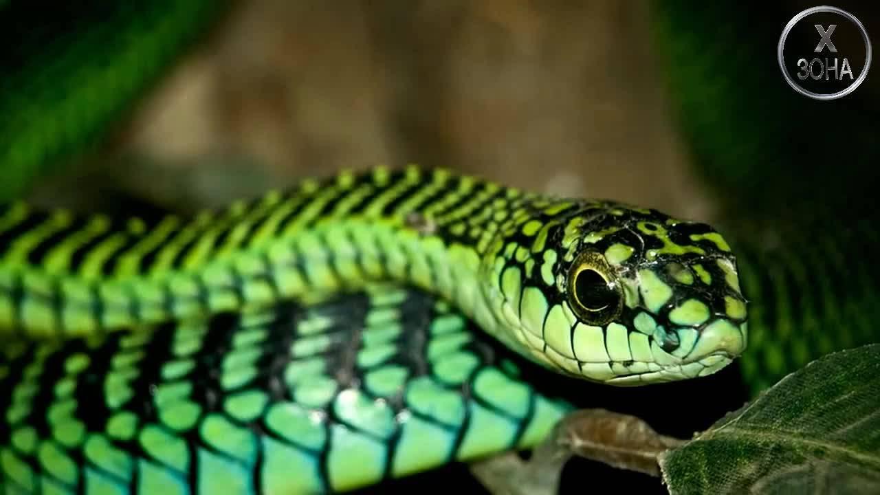 Вижте 4 от най-отровните и опасни животни на планетата!