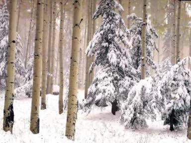 Детски Песнички - Песничка за зимата