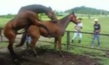 Секс коне
